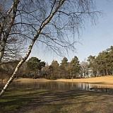 Horsell Common - Sandpits